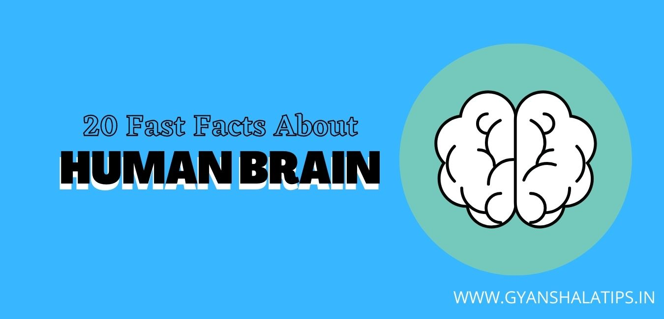 20 Fast Facts About The Human Brain